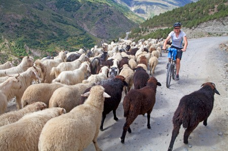 A traffic lamb along the Chandra valley