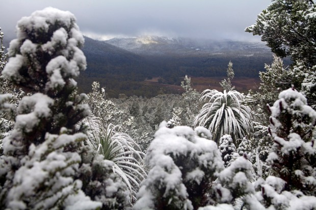 View over snowy treetops on the slopes of Mount Oakleigh