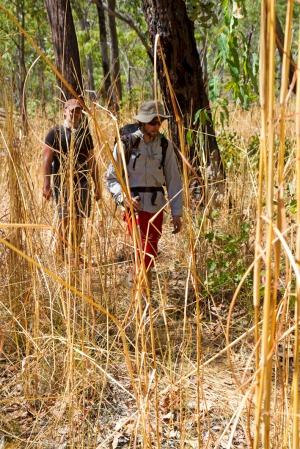 Speargrass2
